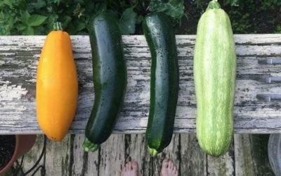 Top 10 makkelijkste moestuin groenten