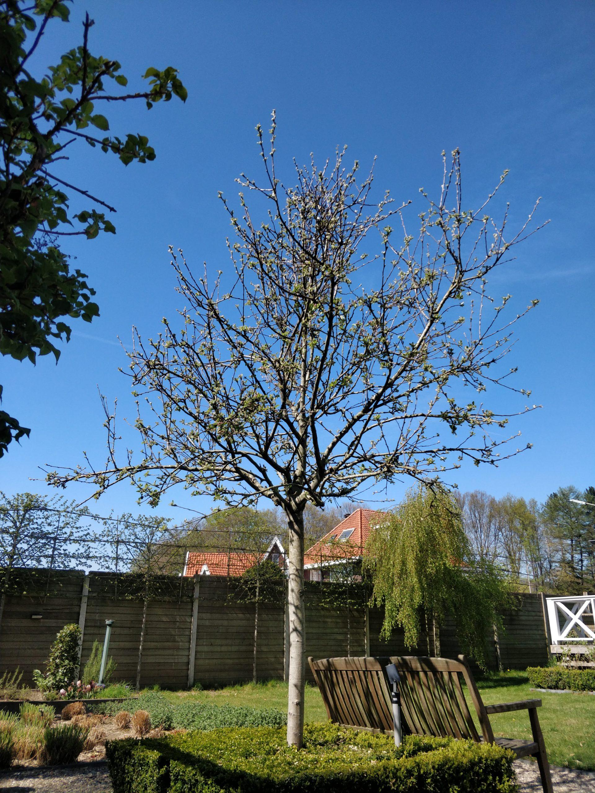 sierbomen-voor-in-de-tuin-fruitboom