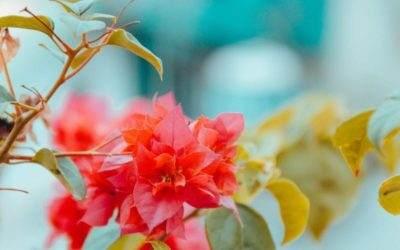 Onderhoudsvriendelijke Planten Voor In De Tuin