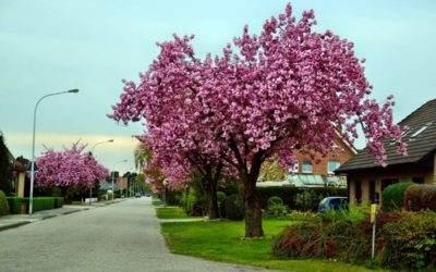 De mooiste kleine bomen voor de voortuin