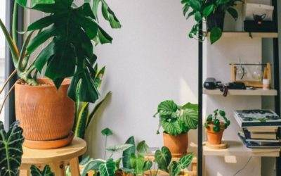 3 Trends voor bloemen in huis in 2020!