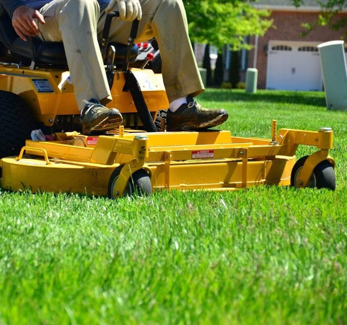 gras zonder mos