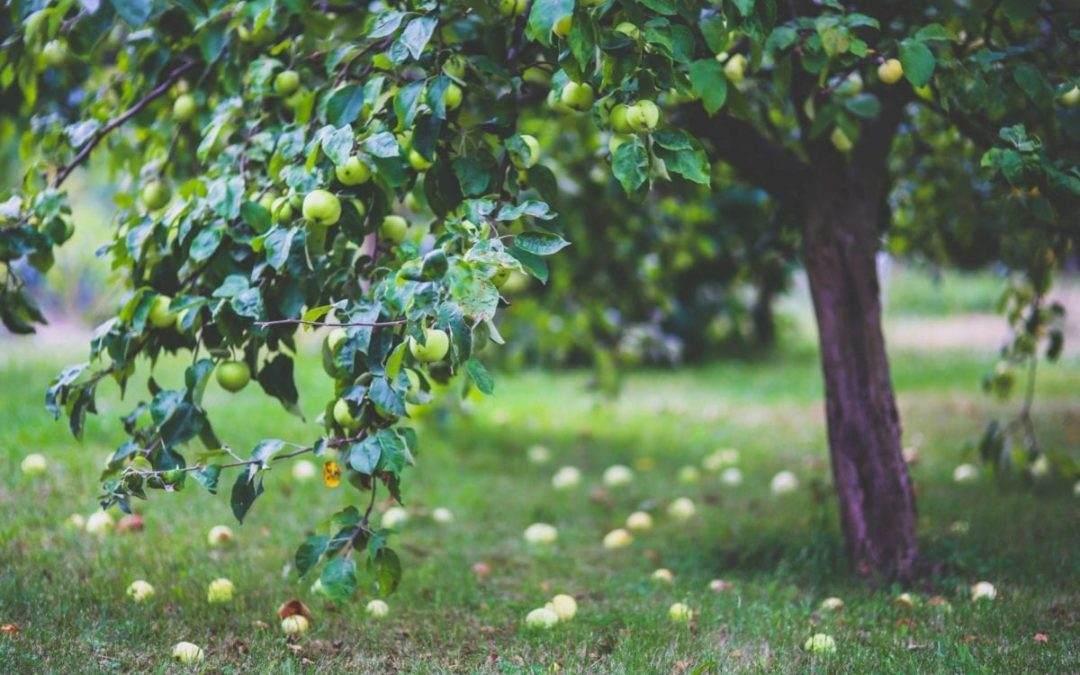 Klein blijvende bomen in je tuin