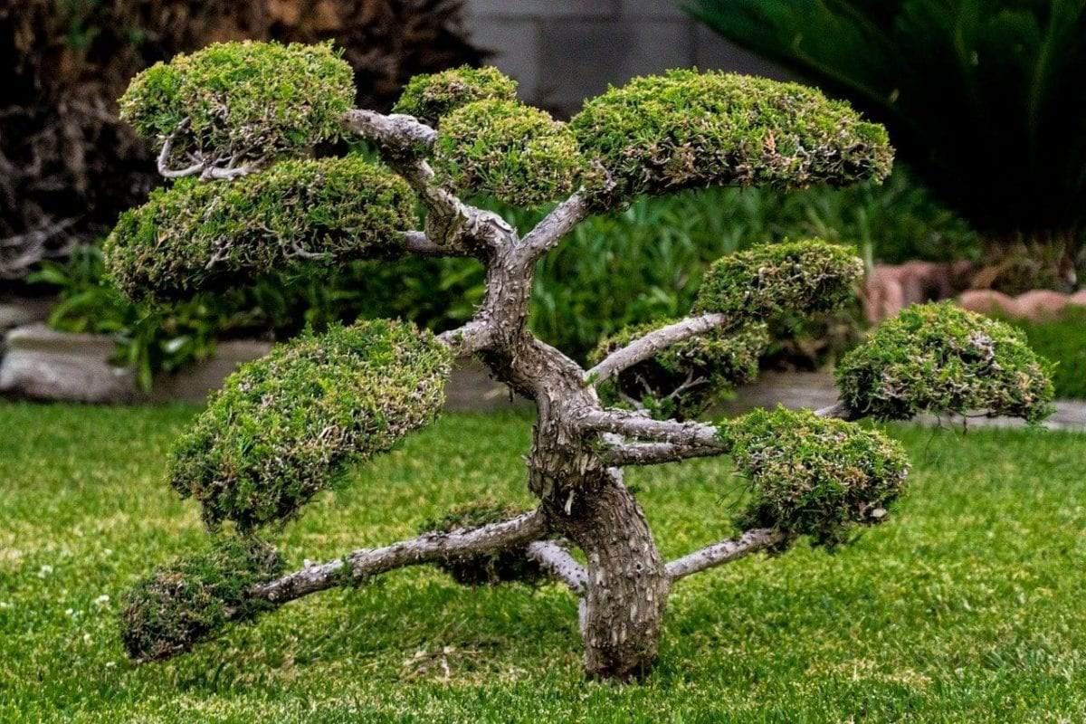 klein-blijvende-bomen-bonsair
