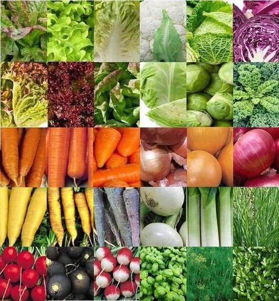 groenten moestuin zaden