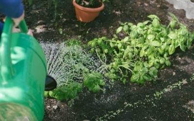 Tuinplanten gemakkelijk onderhouden