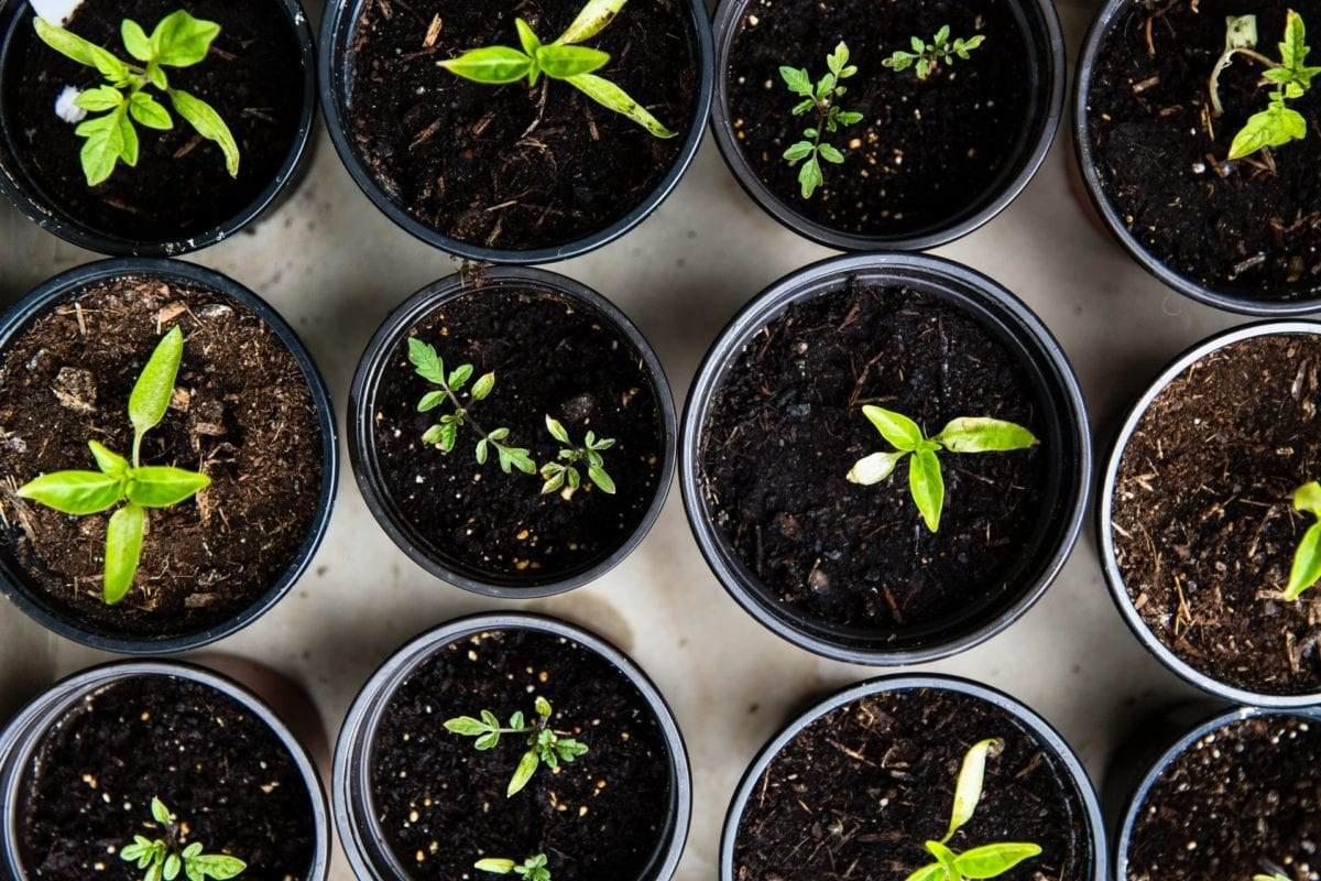 tuinplanten-klein-in-pot