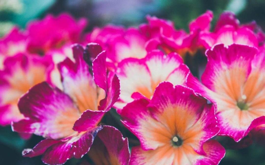 Inspiratie: 5 Zomerbloei toppers voor in jouw tuin!
