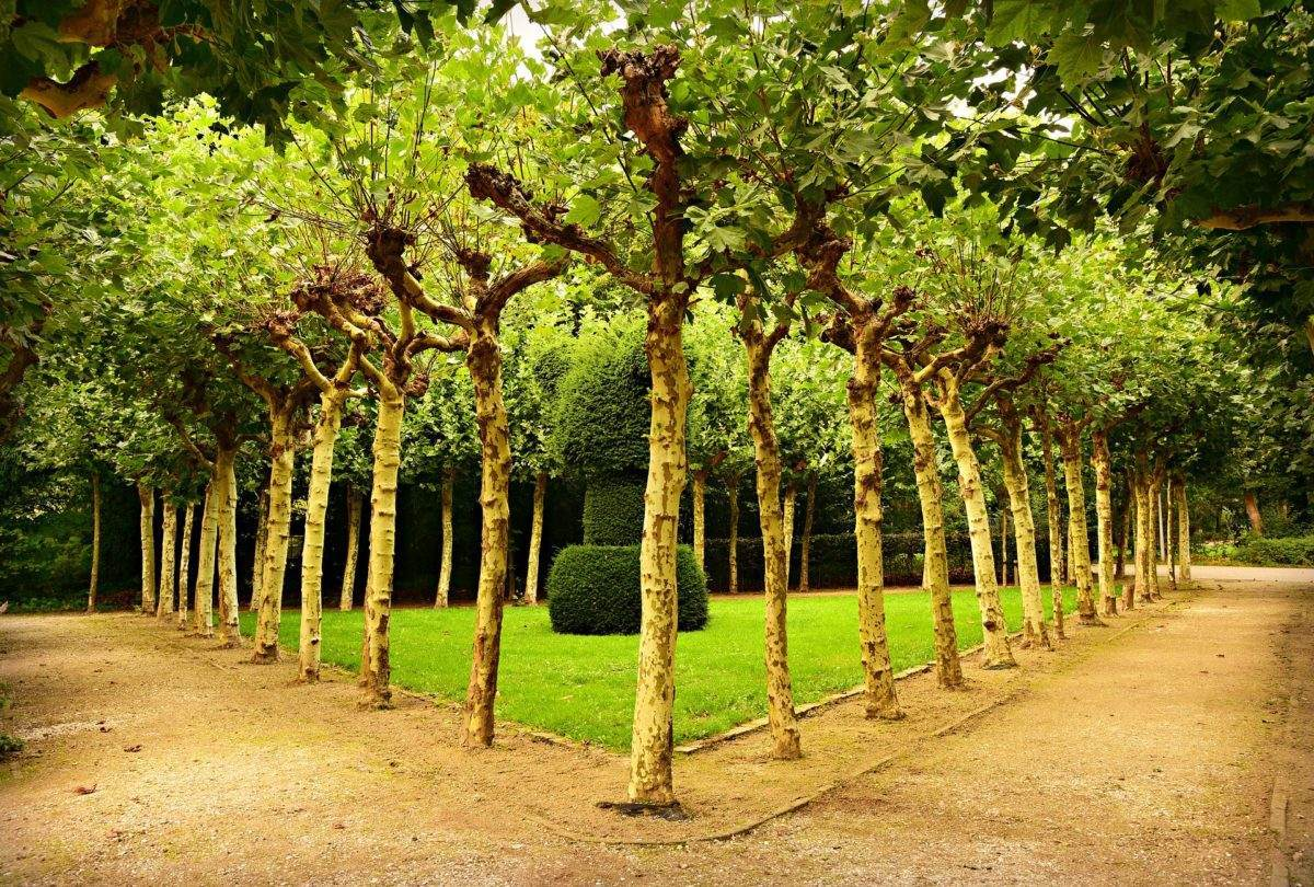 Klein-blijvende-bomen