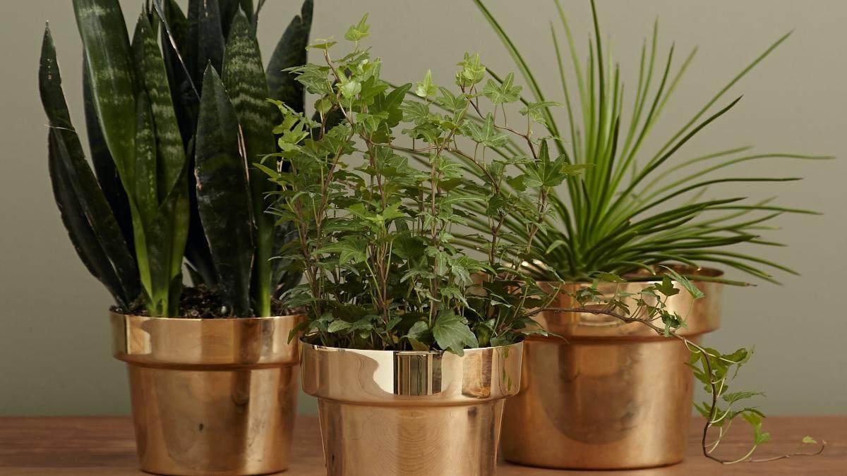 potplanten-onderhoud-zelf-doen